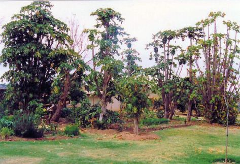 3j Johhny's garden - Little England Aug 93