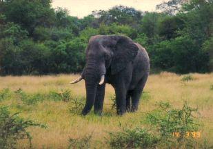 4a elephant