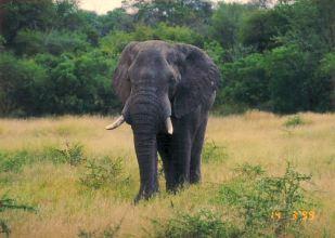 4b elephant
