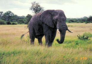 4c elephant