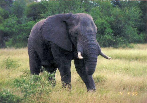 4d elephant