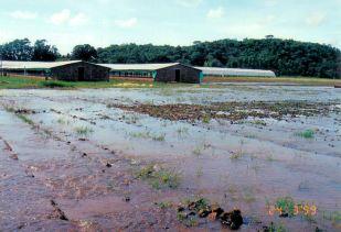 4g wheat lands - Flood Mar99