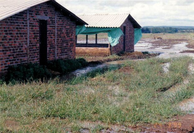 4i chicken sheds - Flood Mar99