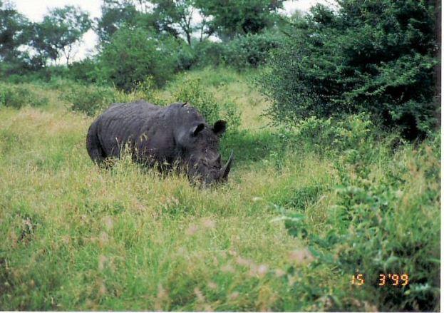 6b rhino