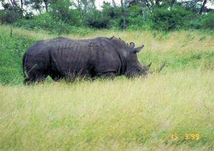 6d rhino