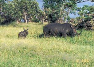 6e mum and kid rhino