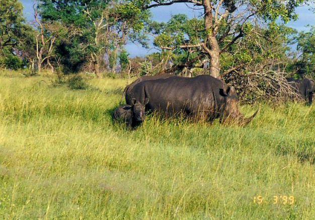 6g mum and kid rhino