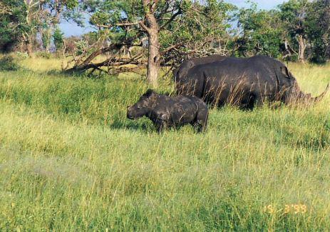 6i child star rhino