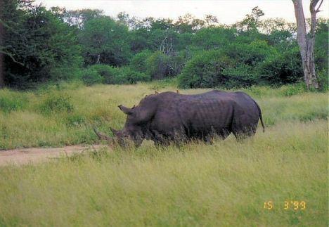 6j Dad rhino