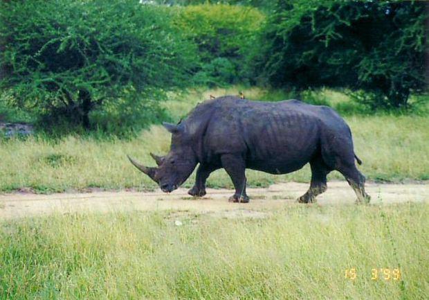 6l rhino