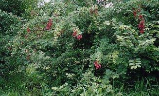 a-no.3 garden-jan 2000
