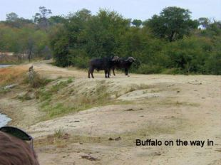 a4 Buffalo on the way in