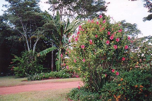 b-pete's garden 2-dec 99