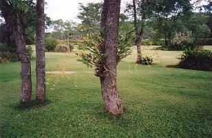 b-pete's garden 3-dec 99