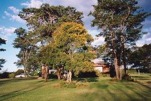 b-pete's garden 4-dec 99