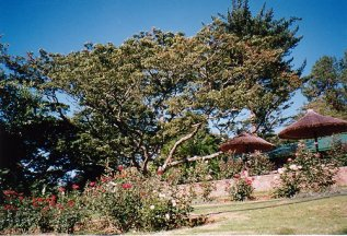 b-pinetree lodge h Msasa-dec 99