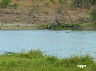 b6 hippo