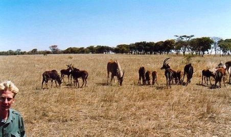 c1 eland & sable 2