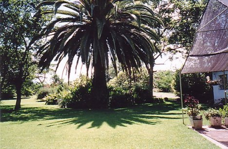 d-soft garden 3 dec 99