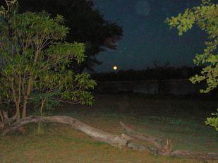 d3 night in the bush