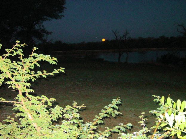 d4 bush night