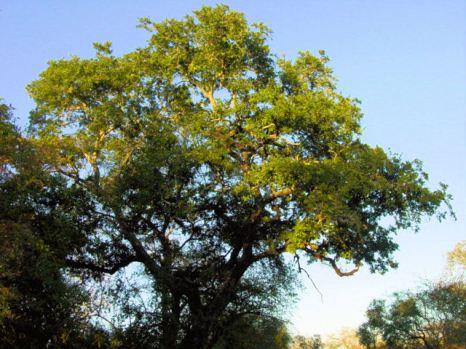 d5 magnificent tree