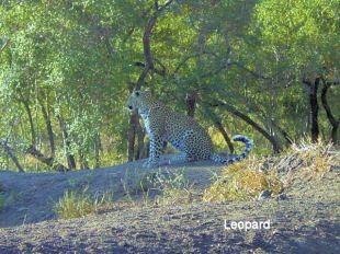 e1 Leopard