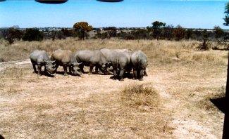 e1 rhino b