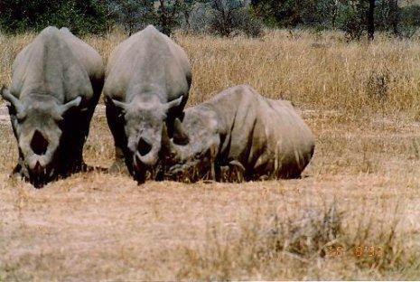 e1 rhino c