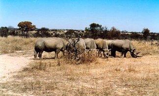 e1 rhino e