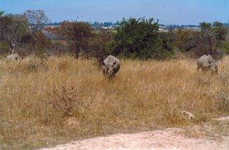 e1 rhino f
