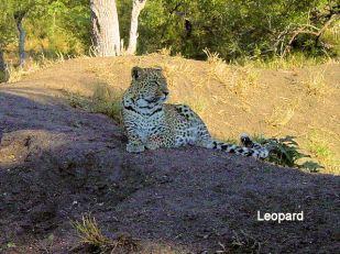 e2 Leopard