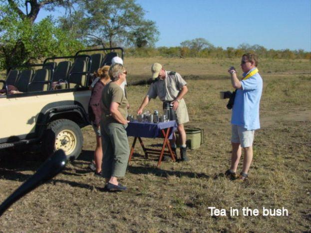 e6 Tea in the bush
