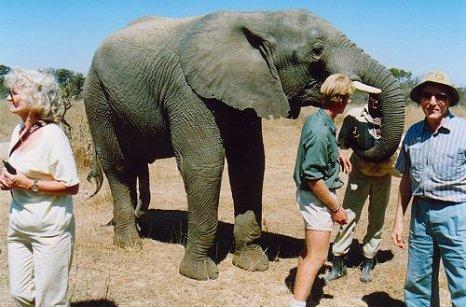 f1 elephant a