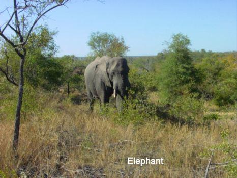 f1 elephant