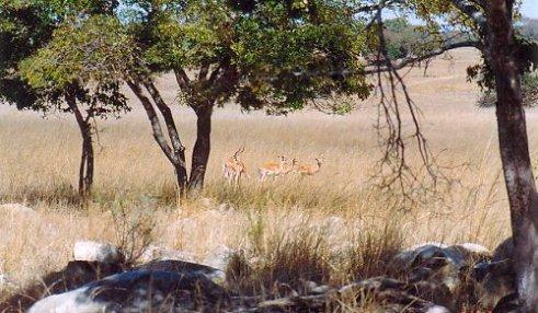 f1 impala a