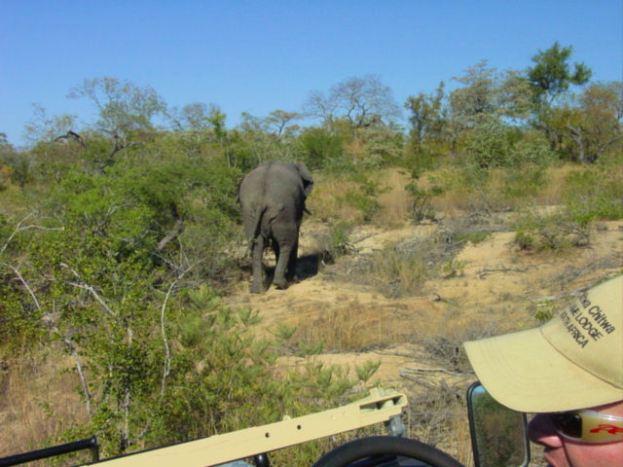 f2 elephant