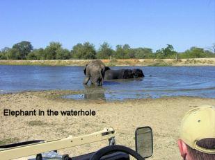 f4 in the waterhole