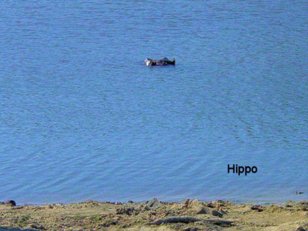 g1 Hippo