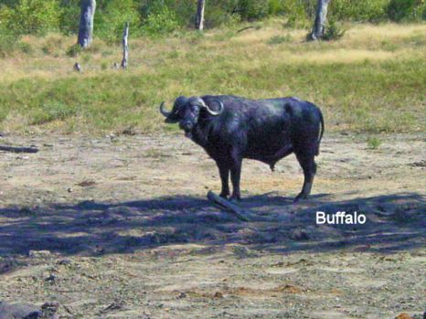 g3 Buffalo