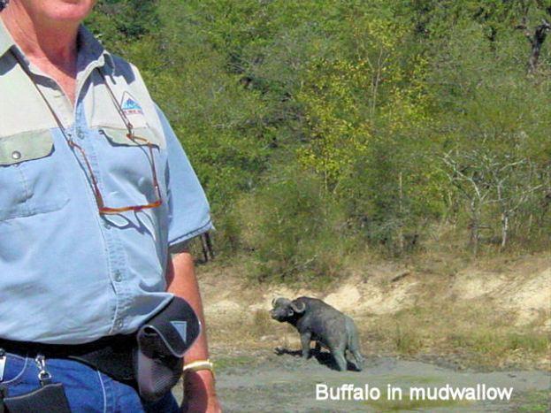 g4 buffalo in mudwallow