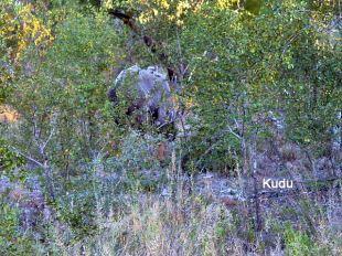 g7 Kudu