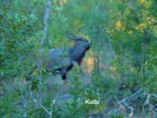 g8 Kudu