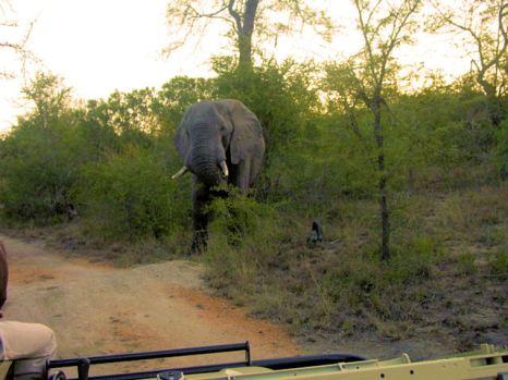 h4 elephant