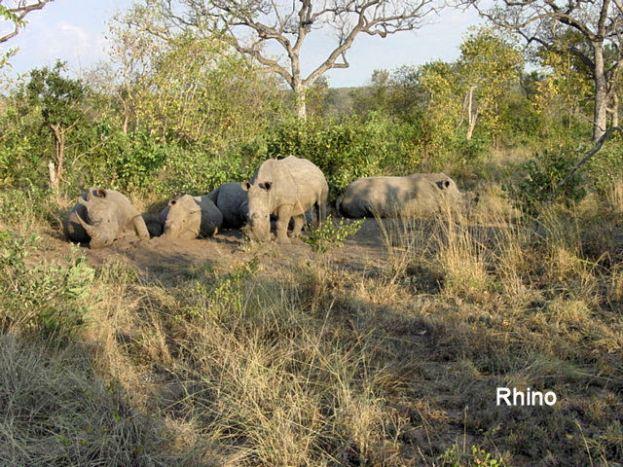 h6 rhino