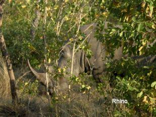 h8 rhino
