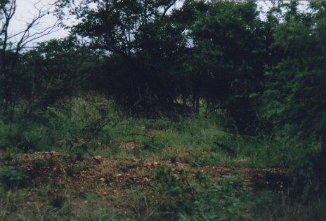 Image66bm