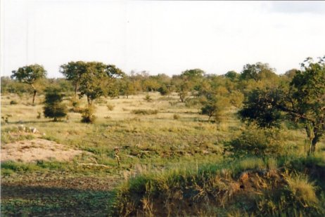 Image81bm