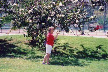 c5 Mo at a tree