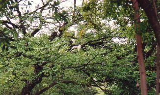 d-birds at elephant hills - jan 2000